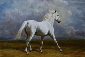 """""""Biały arab""""2011, 45x37cm, olej na płótnie"""